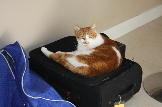 6 in the Circle: Suitcase visitor