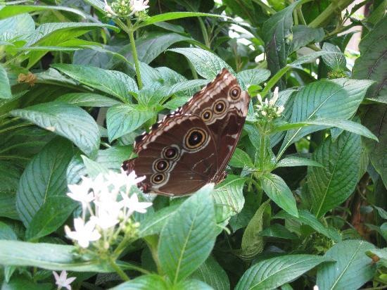 Museum of Science: In the butterfly garden