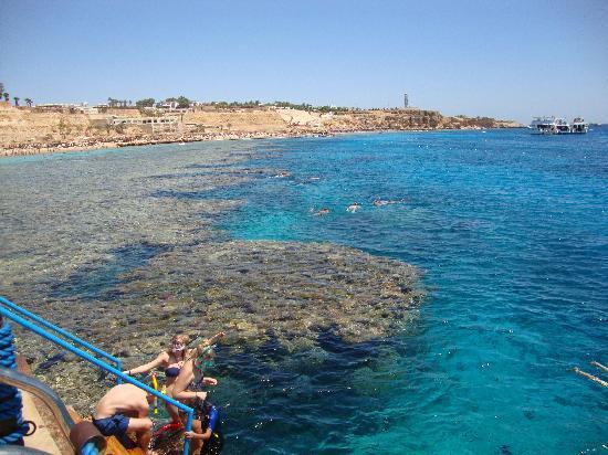 Sharm Cliff Resort : The coral reef at Hadaba Beach