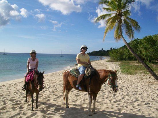 Paul and Jill's Equestrian Stables: On the beach north of Fredriksted (part of the trail ride)