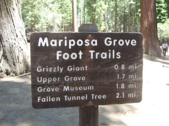 Bilde fra Mariposa Grove of Giant Sequoias