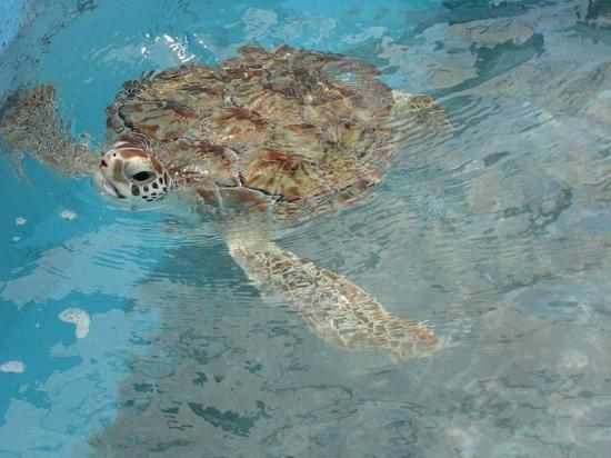 Isla Mujeres, Mexiko: Believe it or not, there were a lot more of these turtle photos to choose from.
