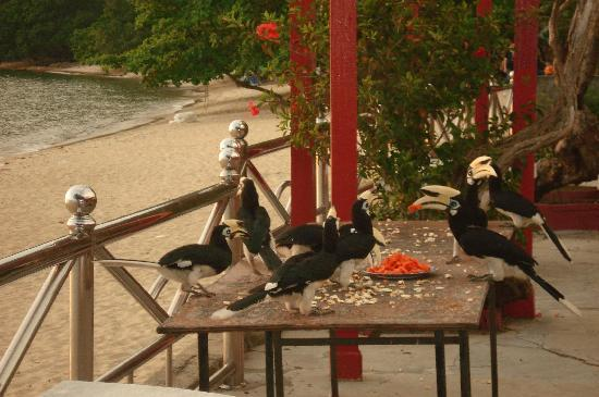 Sea View Hotel & Holiday Resort: Hornbills having dinner