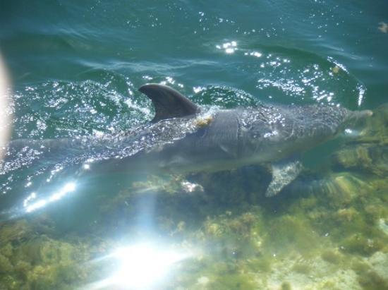 Bilde fra Dolphin Cove Cayman