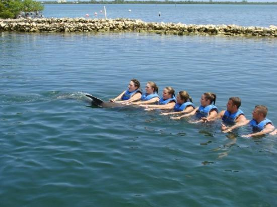 Dolphin Cove Cayman: Dolphin Cove in the Grand Caymen Islands