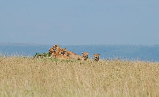 Masai Mara naturreservat, Kenya: wow