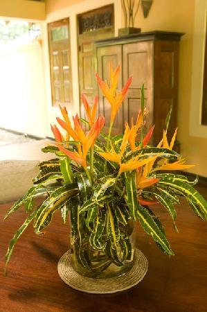 Apa Villa Illuketia: Heliconia Valley products Illuketia