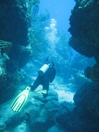 PADI Caribbean Dive College