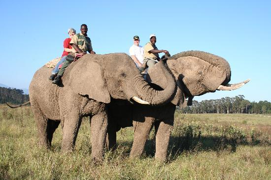Knysna Elephant Park: sunset ride