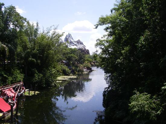 Orlando, FL: Animal Kingdom
