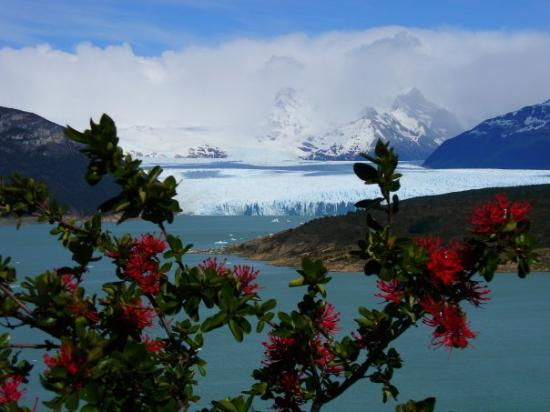 El Calafate, Argentine : Perito Moreno glacier