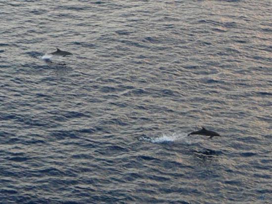 Philipsburg, St-Martin/St Maarten: Flippers ~ Sekunden nur, aber ich habe sie gesehen