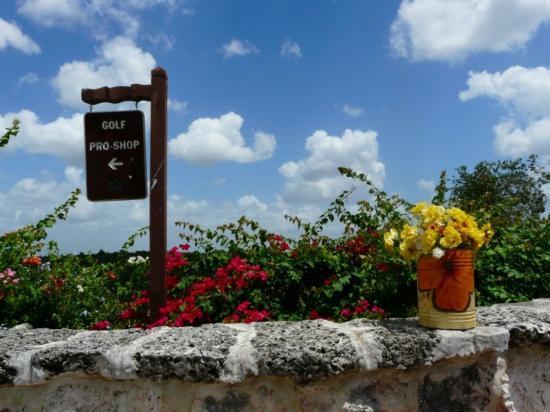 Altos Dechavon, Dominikanische Republik: spielst du schon Golf ... dann bist du in Altos de Chavón in der Dominikanischen Republik auf d