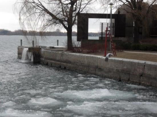 Harbourfront Centre: right temperature for a dip =)