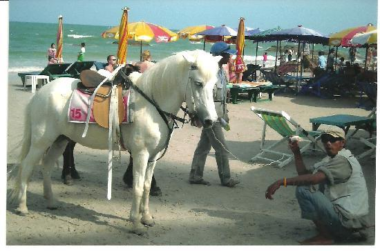 City Beach Resort: City Beach Hotel - Beautifully Groomed Horse for Rent at the Opening to Beach!