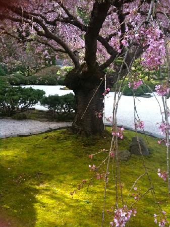 Portland's White House Inn: The beautiful Portland Japanese Garden.