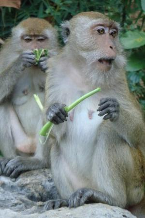 Monkeys Railay Beach Krabi Thailand Picture Of Krabi