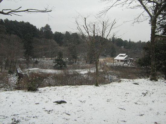 نيكو توكانسو: The view from our room. It snowed at night...