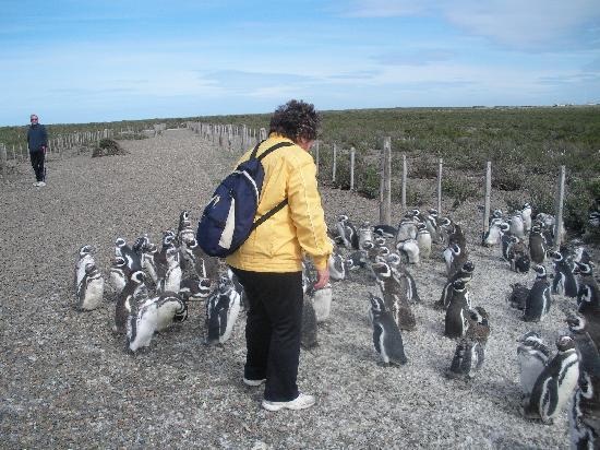 Rio Gallegos, Argentinië: in mezzo ai pinguini