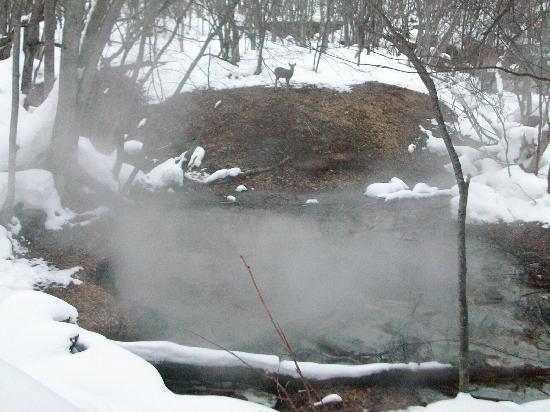 Akan Lake : ぼっけの噴気とエゾシカ