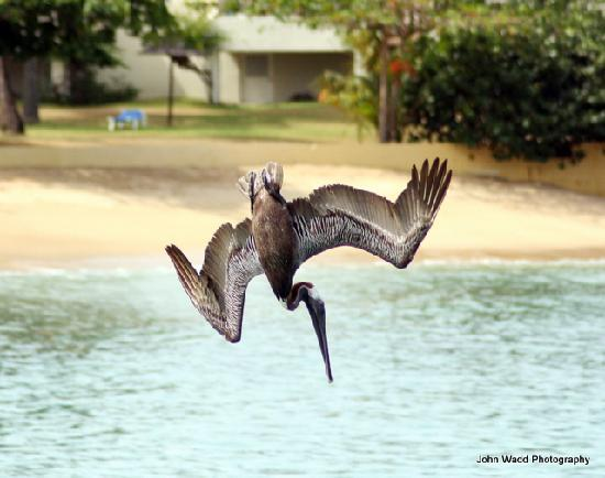 Hawksbill by Rex Resorts: Pelican Diving