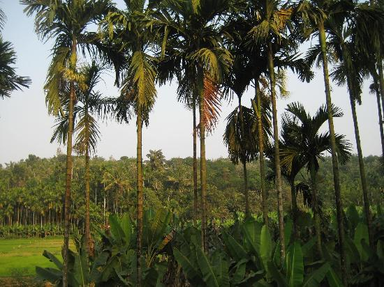 Kandeth Homestay: The countryside