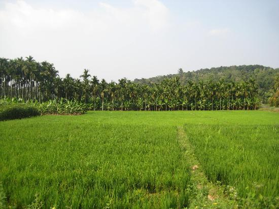 Kandeth Homestay: Lush green within walking distance