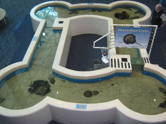 Ripley's Aquarium of the Smokies: aquarium