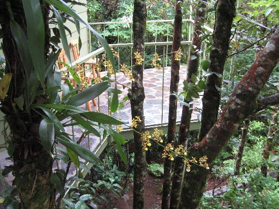 Hidden Canopy Treehouses Boutique Hotel: Trees & Wild Orchids all over property
