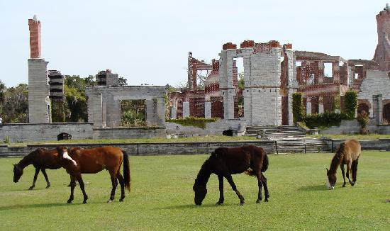 Cumberland Island National Seashore: Dungeness and wild horses.
