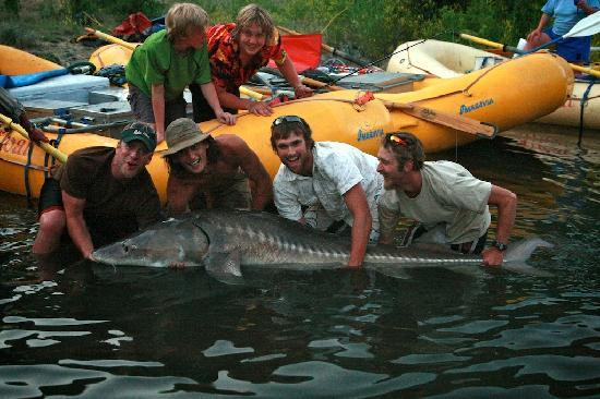 Lewiston, ID: Hell's Canyon Sturgeon