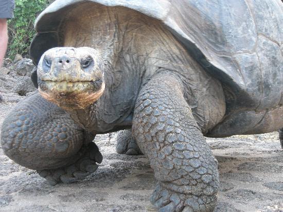 Eq Touring Galapagos