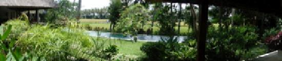 Villa Pantulan: Sitting in the pool overlooking the fields