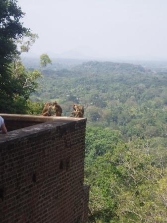 Sigiriya: the 1st time we met monkeys