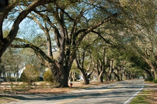 Aiken, SC: Oak Alley