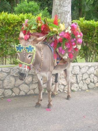 Jamaica afbeelding