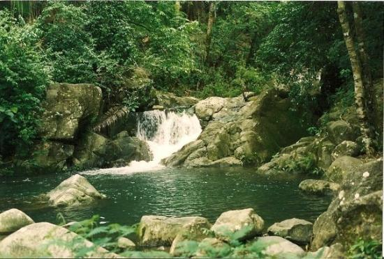 Tela, Honduras: Rainforest: Trujillo, Honduras