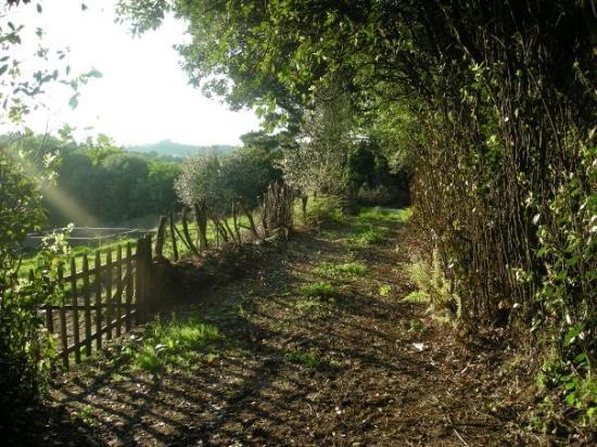 Ferrol, España: My Mom's childhood backyard