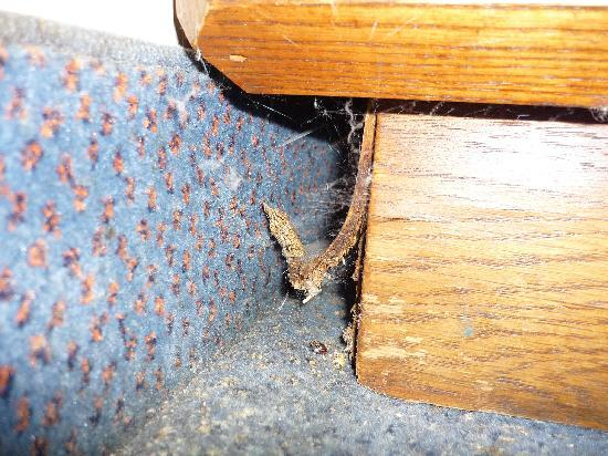 Good Nite Inn Buena Park: The spider living under our nightstand
