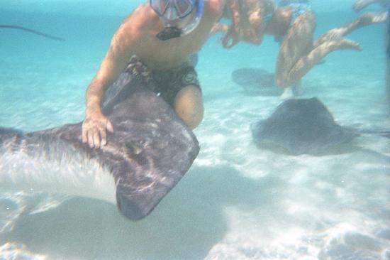 Fat Fish Adventures: new friends