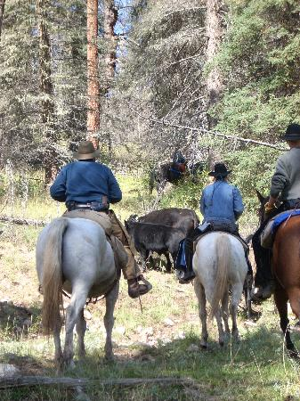 Wilderness Trails Ranch: Going riding