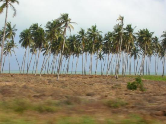 Cotonou Photo
