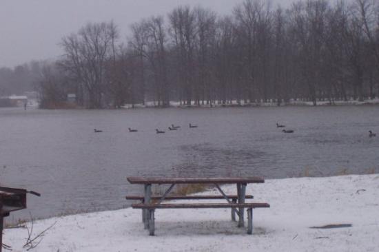 ซีราคิวส์, นิวยอร์ก: Vista del río Onondaga con unos patos retando el agua súper fría.