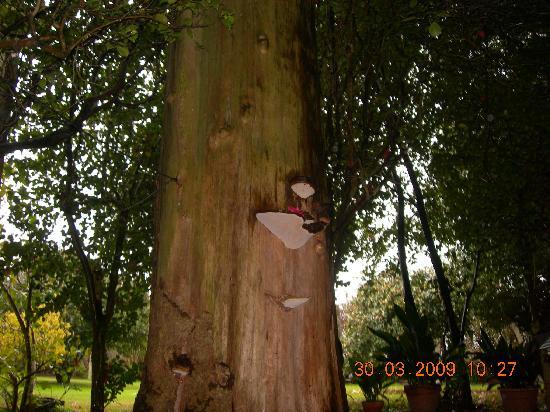 Pazo Cibran: Mira que árbol