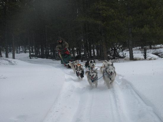 Muktuk Adventures : Fresh snow - fun for the dogs and for the musher.