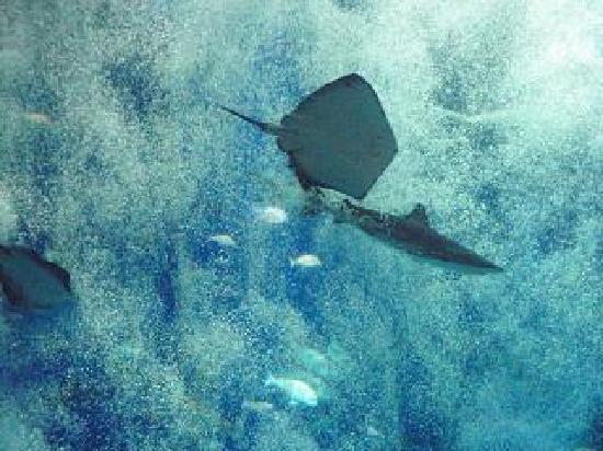 Oarai-machi, Япония: キレイだけど魚にストレスはないのかな?