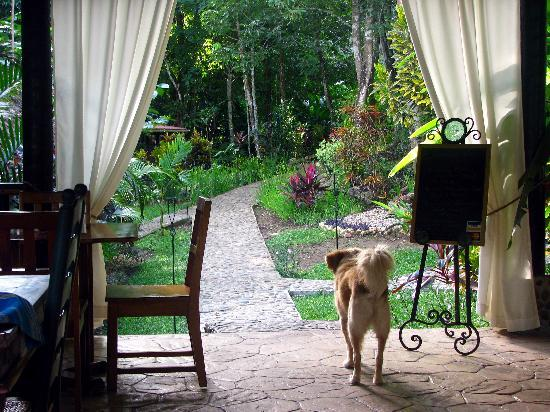 Table Rock Jungle Lodge: Friendly Dogs welcome guests to breakfast at the dining area