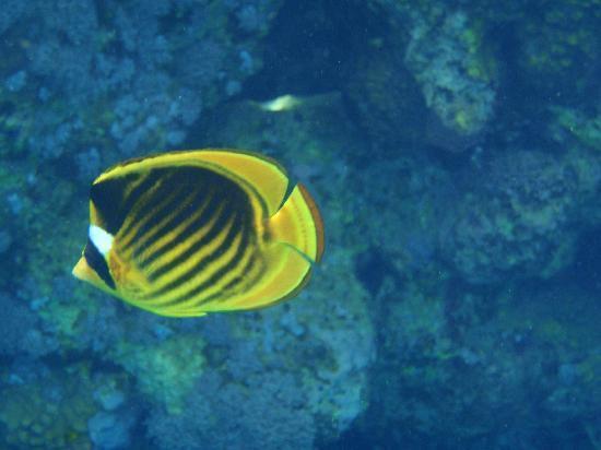 Jaz Lamaya Resort: more fish