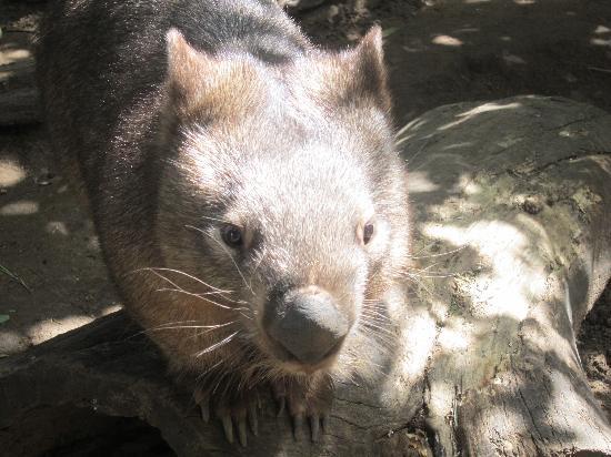 Lone Pine Koala Sanctuary: Our Favorite Shot
