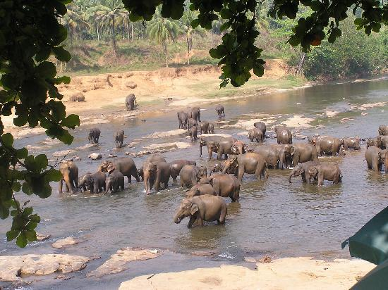 Induruwa, Шри-Ланка: At elephant orphanage